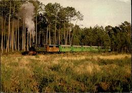 40 - SABRES - Ecomusée De La Grande Lande Marquèze - Train Touristique - Sabres