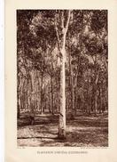 VIET NAM, PLANTATION D'HEVEAS (COCHINCHINE), Planche Densité = 200g, Format 20 X 29 Cm, (Ag. Eco. Indochine) - Géographie