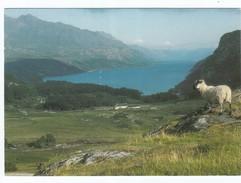 Irland Loch Maree From Tollie - Irland