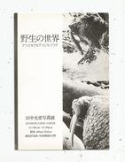 G-I-E , Cp , Photographie , NIKON SALON , JAPON  , Voyagée , 1976 , 2 Scans - Fotografia