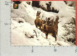CARTOLINA VG ANDORRA - Vall's D'Andorra - Isards A La Neu - 10 X 15 - ANN. 1975 - Andorra