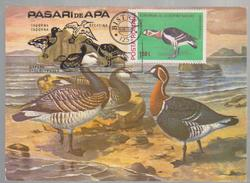 BIRD MAXI CARD  ROMANIA-MAXI CARD GEESE