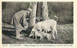 N°32254 -cpa En Périgord -l'apprentissage à La Recherche De La Truffe- - Agriculture