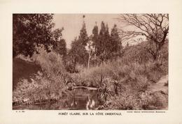 MADAGASCAR, FORÊT CLAIRE, SUR LA CÔTE ORIENTALE, Planche Densité = 200g, Format 20 X 29 Cm, (Service Photo. Madagascar) - Géographie