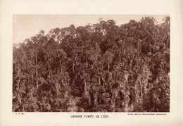 MADAGASCAR, GRANDE FORÊT DE L'EST, Planche Densité = 200g, Format 20 X 29 Cm, (Serv. Photo. Madagascar) - Géographie