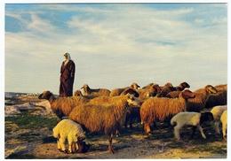 TERRA SANTA - SCENA PASTORALE - TERRE SAINTE - HOLY LAND - IM HL. LAND - HIRTENSZENE - 1968 - Vedi Retro - Palestina