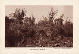 MADAGASCAR, BROUSSE DANS L'ANDROY, Planche Densité = 200g, Format 20 X 29 Cm, (Serv. Photo. Madagascar) - Géographie