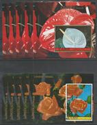 2x 5x AJMAN - Plants - Flowers - Roses - CTO