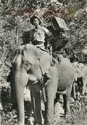 PIE-T-17-65 : ELEPHANT - Elephants