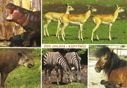 20G : Czech Republic Zoo Jihlava (tapir,zebra,hippo) Postcard With Postman Used Stamp - Czech Republic