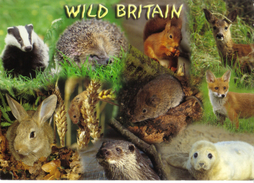 20G : Great Britain Wild Animals Postcard With London Great Fire Used Stamp - United Kingdom