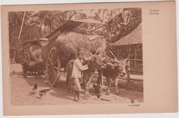 LB 2 : Indonésie : Java: Javanese  , Attelage  Boeuf  S ,  Grobak  Malang - Indonesia