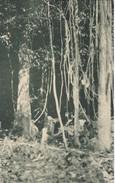 POSTAL DE GUINEA ESPAÑOLA DE UN ASPECTO DEL BOSQUE EN OKOLA AL ABRIRSE EL CAMINO (EXPO IBERO-AMERICANA SEVILLA 1929) - Guinea Ecuatorial