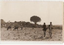 AFRICA - ERITREA - YOUNG SHEPHERDS - RPPC 1930s ( 828 ) - Eritrea