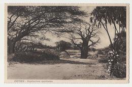 AFRICA - ERITREA - SPONTANEOUS VEGETATION - 1920s ( 798 ) - Eritrea
