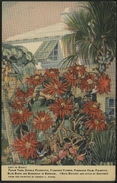 BERMUDA 1940 : NATURE FROM THE PAINTING. By Ernest C. Riedel - Illustrateurs & Photographes
