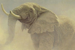 [ T95-059   ]   Elephant Mammal, China Pre-stamped Card, Postal Stationery