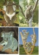KOALA Australian Native Bear 4 Cards - Autres