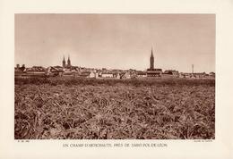FINISTERE, UN CHAMP D'ARTICHAUTS, PRES DE ST-POL-DE-LEON, Planche Densité = 200g, Format 20 X 29 Cm, (Le Lannou) - Géographie
