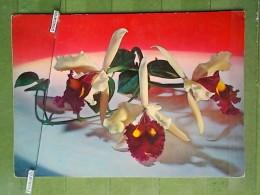 Kov 754x - Bloemen,  Fleurs, Flowers, Blumen - Fleurs