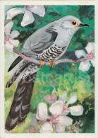 Cuckoo - Cuculus Canorus - Illustration - Birds Of Russian Forest - 1979 - Russia USSR - Unused - Oiseaux