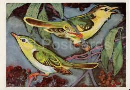 Common Chiffchaff - Phylloscopus Collybita - Birds Of Russian Forest - 1979 - Russia USSR - Unused - Oiseaux