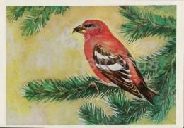 Crossbill - Birds Of Russian Forest - 1979 - Russia USSR - Unused - Oiseaux
