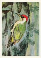 European Green Woodpecker - Picus Viridis - Birds Of Russian Forest - 1979 - Russia USSR - Unused - Oiseaux