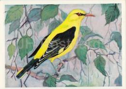 Eurasian Golden Oriole - Oriolus Oriolus - Birds Of Russian Forest - 1979 - Russia USSR - Unused - Oiseaux