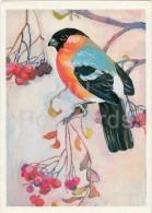 Eurasian Bullfinch - Pyrrhula Pyrrhula - Birds Of Russian Forest - 1979 - Russia USSR - Unused - Oiseaux