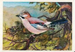 Eurasian Jay - Garrulus Glandarius - Birds Of Russian Forest - 1979 - Russia USSR - Unused - Oiseaux