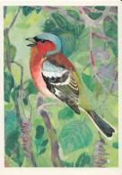 Common Chaffinch - Fringilla Coelebs - Birds Of Russian Forest - 1979 - Russia USSR - Unused - Oiseaux