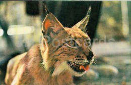 Eurasian Lynx - Lynx Lynx - Zoo - 1976 - Russia USSR - Unused - Autres