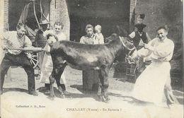 Scène Humoristique à La Ferme: Chailley (Yonne): En Batterie! (clystère Et âne) - Collection J.D. - Fermes