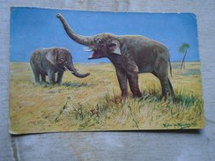 D146336  Elephants Elephant 1937 -Müller - Elephants
