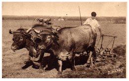 Agriculture Attelage Landais Travaux Aux Champs - Pouillon Année 1958 - Attelages