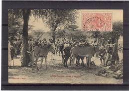 DIRRE DAOUA - Zèbres D'Abyssinie - TBE - Äthiopien