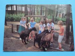 Domein DIESTERWEG ( Heide ) Anno 1982 ( Zie Foto Details ) !! - Kalmthout