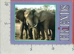 CARTOLINA VG SUD AFRICA - AFRICAN ELEPHANT - 10 X 15 - ANN. 19?? - Elephants