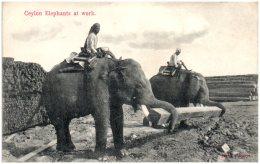 CEYLON - Elephants At Work   (Recto/Verso) - Sri Lanka (Ceylon)
