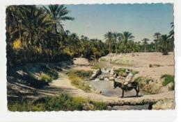 TUNISIA - L'OUED DANS LA PALMERAIE - EDIT COMPAGNIE DES ARTS - 1960s ( 646 ) - Tunisia