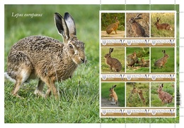 Ukraine. The European Hare   Lepus Europaeus. Sheet. Personalized