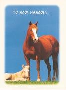 Tu Nous Manques ... - Pferde