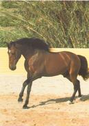 Andalou - Pferde