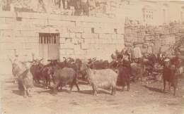 MALTE / Photo Card - Carte Photo - Chevrier - Goat - Chèvres - Malta
