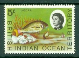 British Indian Territory (BIOT): 1968/70   QE II - Marine Life   SG16    5c   MH - British Indian Ocean Territory (BIOT)
