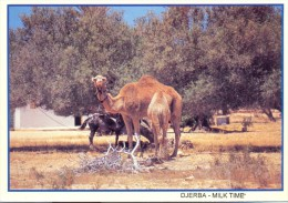 Tunisia/Tunisie - Postcard - Djerba - Milk Time - Tunisia