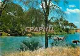 CPM African Wild Life Elephant - Elefanten