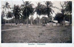 ZANZIBAR - COLTIVATION - TANZANIA - VIAGGIATA - Tanzania