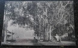 Indochine Pousse Pousse Sous Les Lianes  Saigon  Cpa - Vietnam